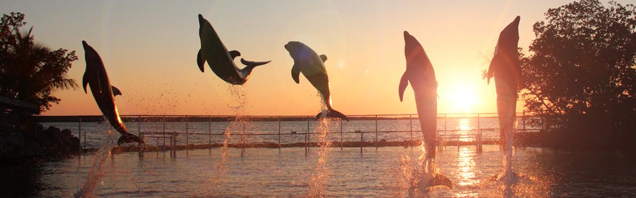 happy dolphins