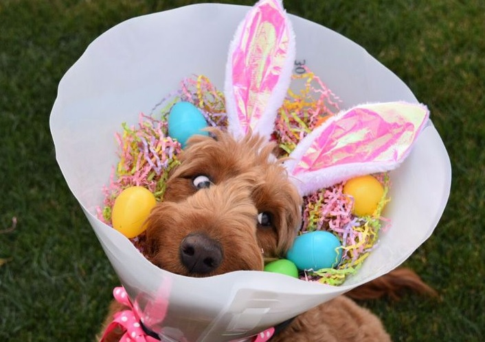 Doggie Easter